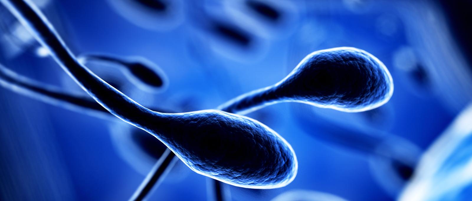 Donantes de esperma en gestación subrogada