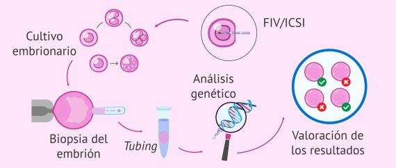 El proceso de DGP (diagnóstico genético preimplantacional)