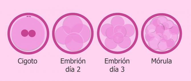 Cultivo y desarrollo embrionario 'in vitro'