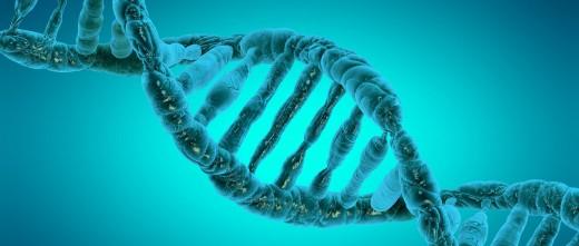 Carga genética del embrión