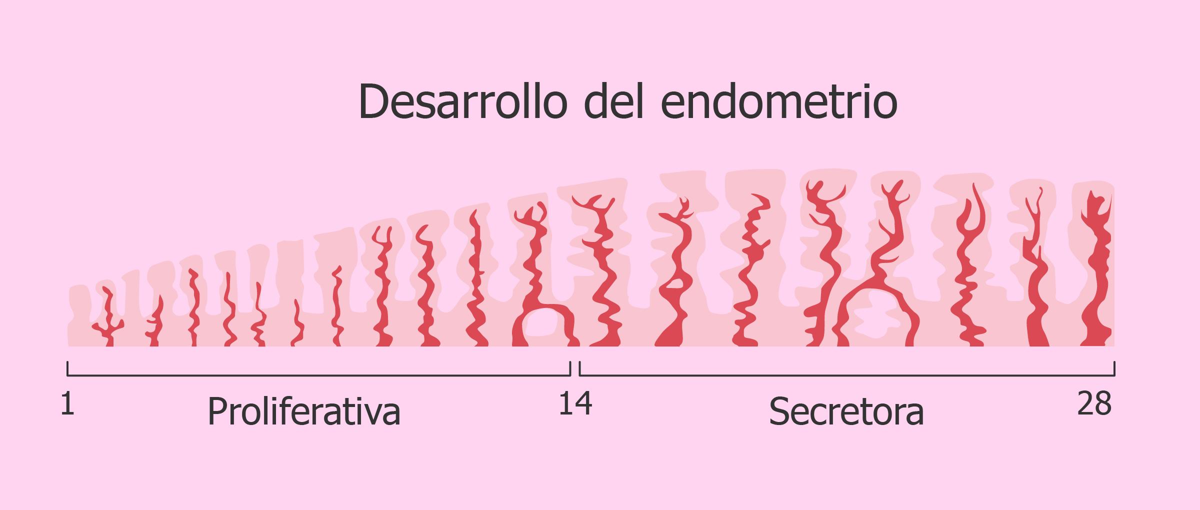 Preparación endometrial para la transferencia de embriones