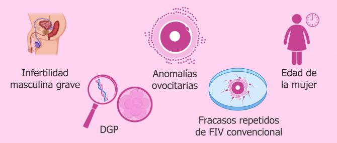 Fecundación del óvulo