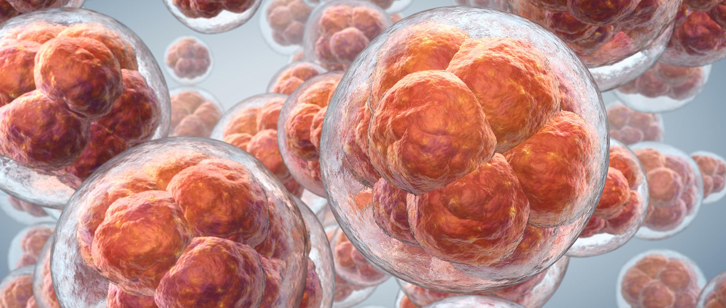Creación de embriones