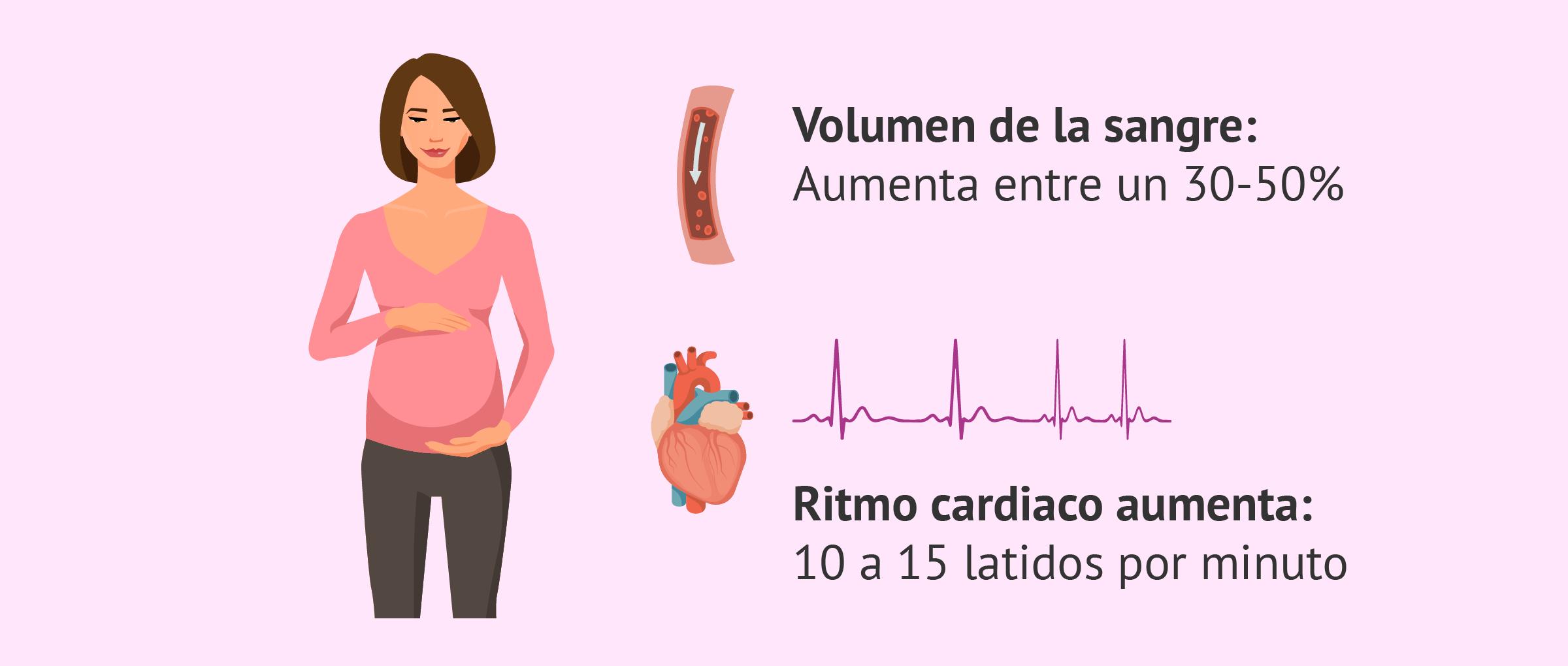 Cambios cardiovasculares durante el embarazo