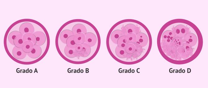 Imagen: Comparativa de la calidad de embriones