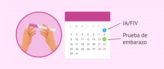 La prueba de embarazo: ¿Cómo y cuándo debe hacerse?