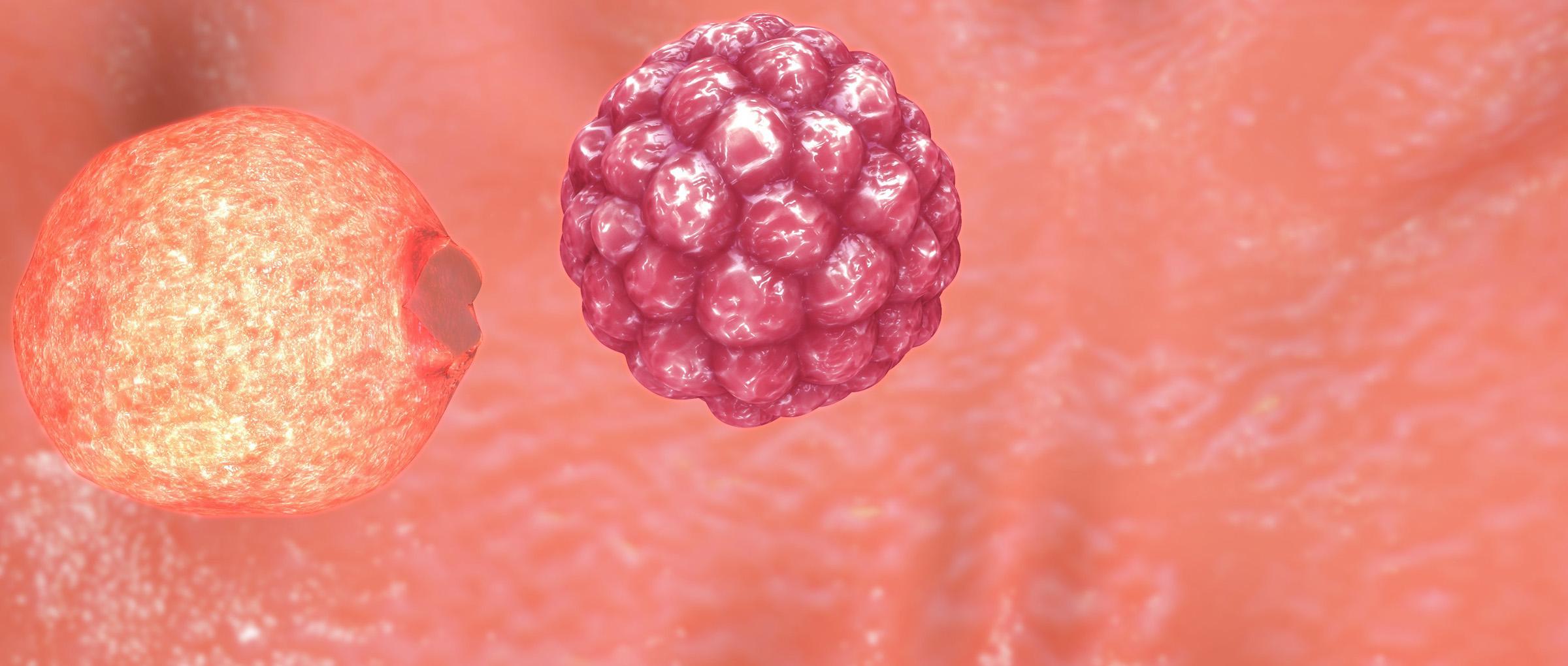 Embrión hatcheado