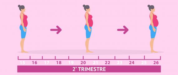 El segundo trimestre del embarazo