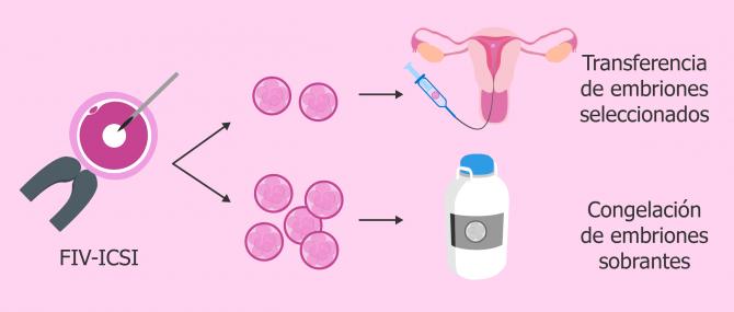 Criopreservación de embriones sobrantes